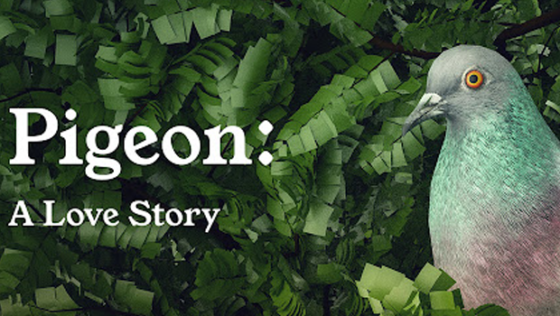 Pigeon: A Love Story Home